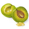 An illustration of a greengage